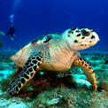 tropical island turtle